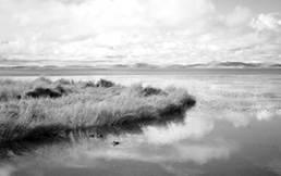 bewachsenes Ufer