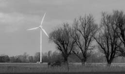 Windkraftwerk auf Feld vor drei Bäumen