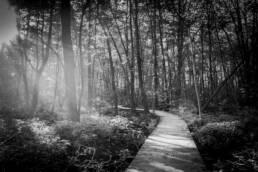 Waldpfad mit seitlichem Lichteinfall