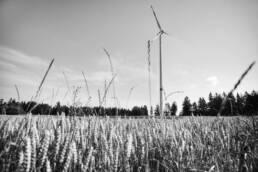 Windkraftanlage auf Weizenfeld