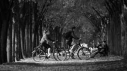 Zwei Menschen mit Fahrrad kreuzen eine Allee